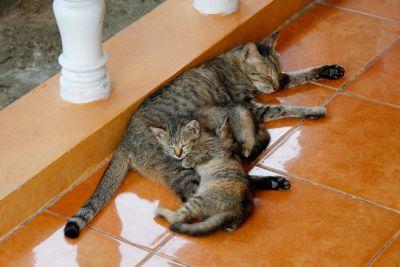 gatto, felino, gattino, animali, pelliccia, gatto domestico, all'aperto, kitty, carina