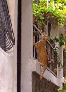 tre, innenlands cat, street, gjerdet, eksteriør, hopp