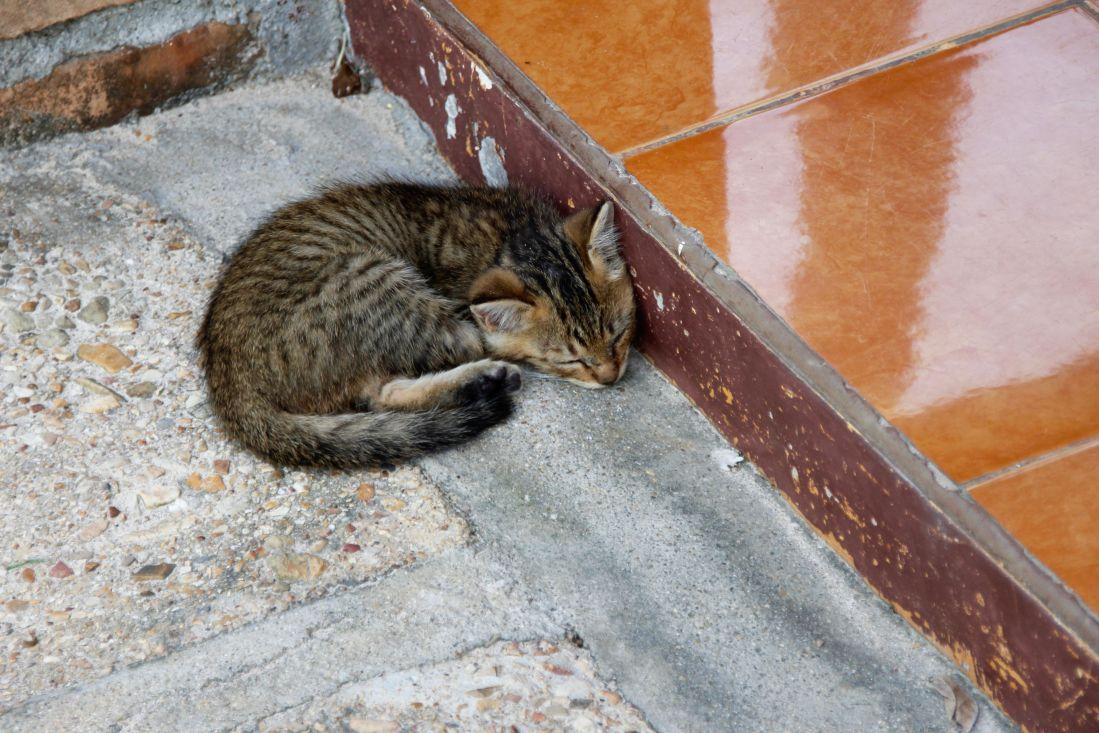 katten, utendørs, bakken, fortau, asfalt, dyr, sove