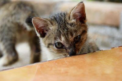 cat, animal, cute, pet, kitten, playful, portrait, eye