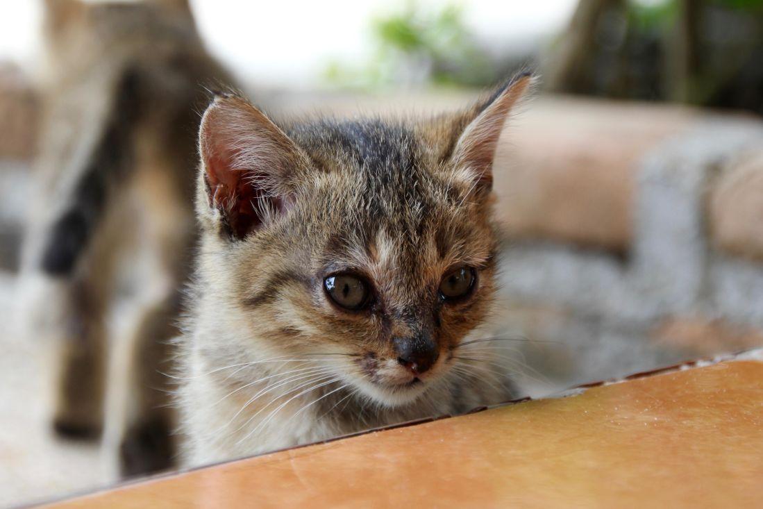 kostenlose bild niedlich katze tier katze katze kitty haustier fell schnurrhaare. Black Bedroom Furniture Sets. Home Design Ideas