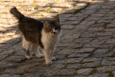 chat, chaton, félin, kitty, fourrure, pour animaux de compagnie, mignonne, chaussée, street, urbains, moustaches