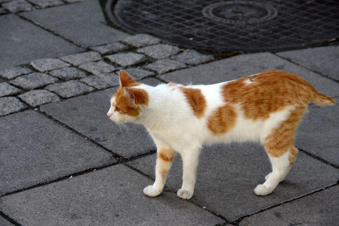 gato, gatito, pavimento, urbano, calle, amarillo, curioso