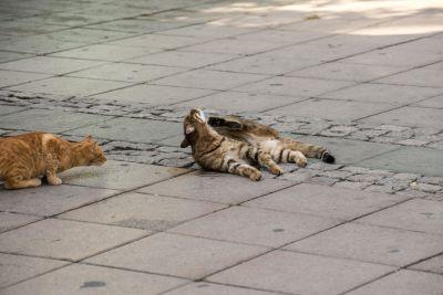 cat, animal, pavement, street, asphalt, urban, domestic cat
