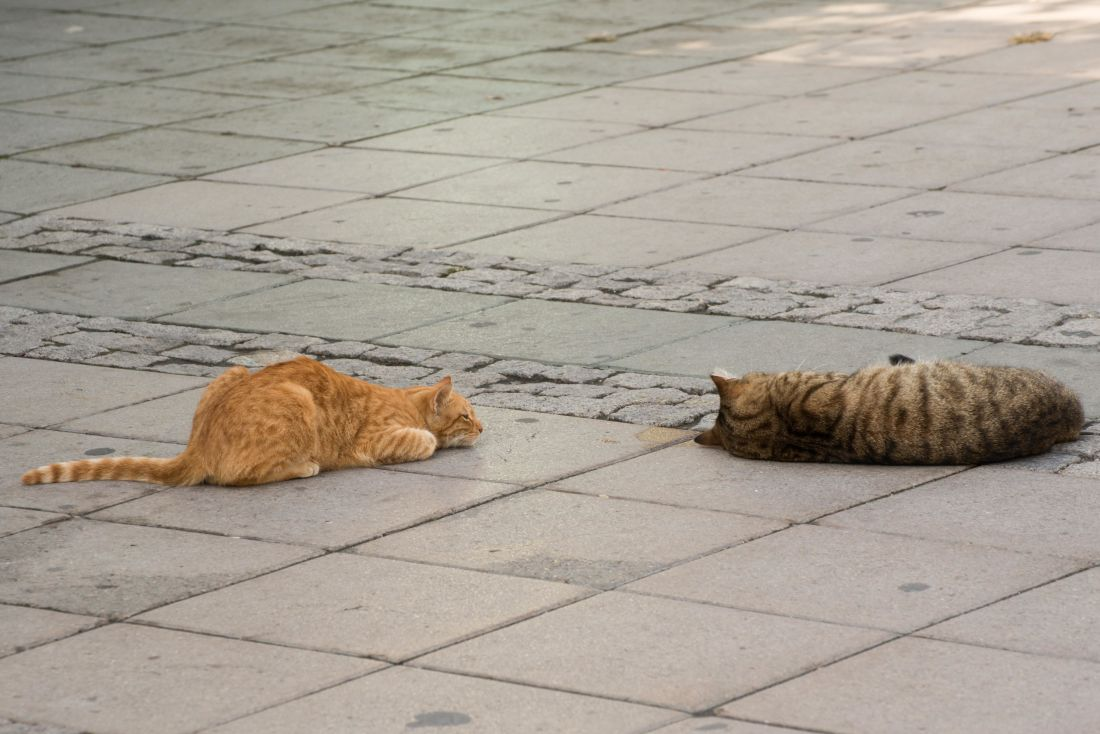 yellow cat, gray cat, urban, pavement, kitten, animal, pet