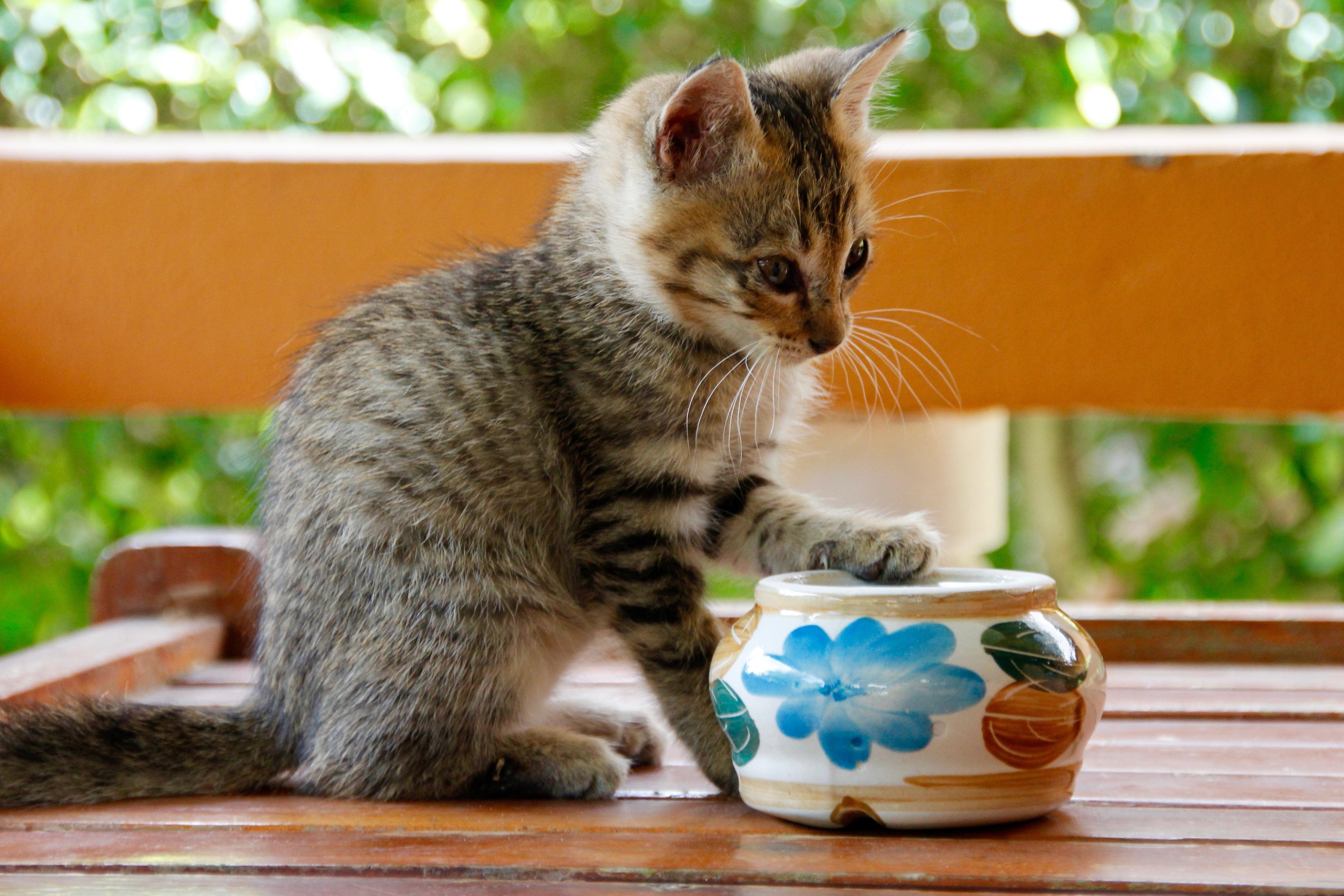 У кошки жидкий стул что делать в домашних условиях: лечение 55