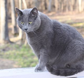 cat, fur, cute, eye, animal, grey, portrait, nature, pet