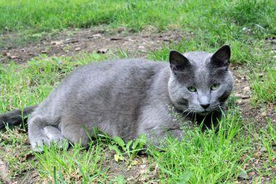curiosity, adorable, cat, animal, grass, cute, fur, nature