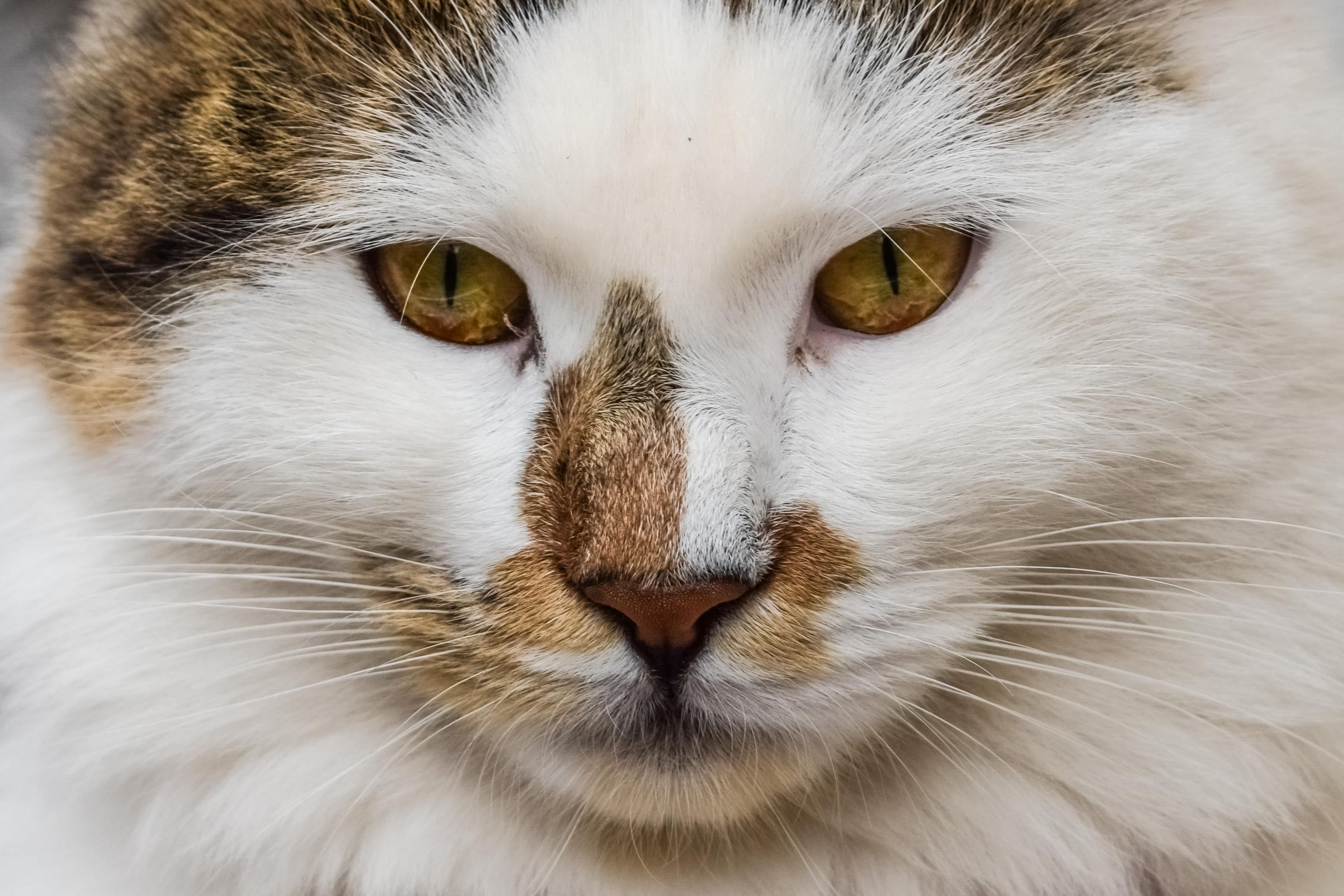 Kissan Rekisteröinti