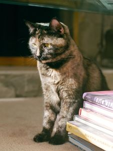cat, feline, kitty, kitten, book, pet, fur, whiskers, cute, eyes