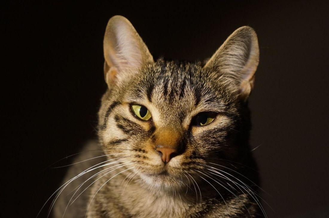 cute, cat, eye, portrait, shadow, dark, pet, feline, kitten, fur, kitty