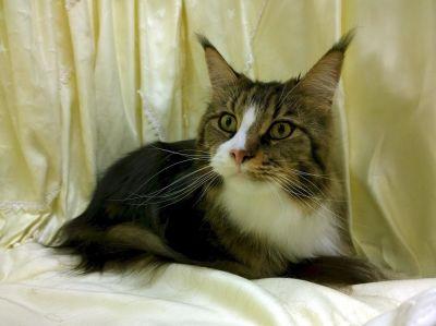 cat, cute, portrait, eye, kitten, fur, pet, textil, kitty, feline