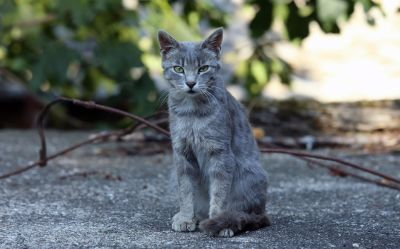 nature, animal, cat, kitten, asphalt, outdoor, urban, feline, fur, kitty, pet, cute