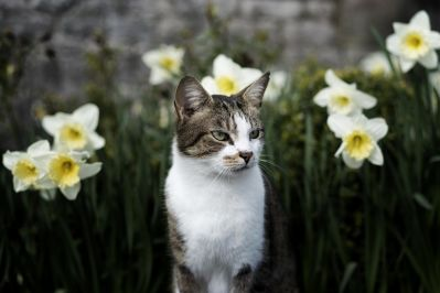 nature, flower, kitty, cat, feline, kitten, pet, fur