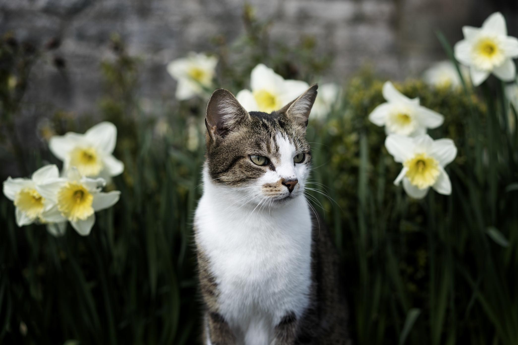 Free Picture Nature Flower Kitty Cat Feline Kitten