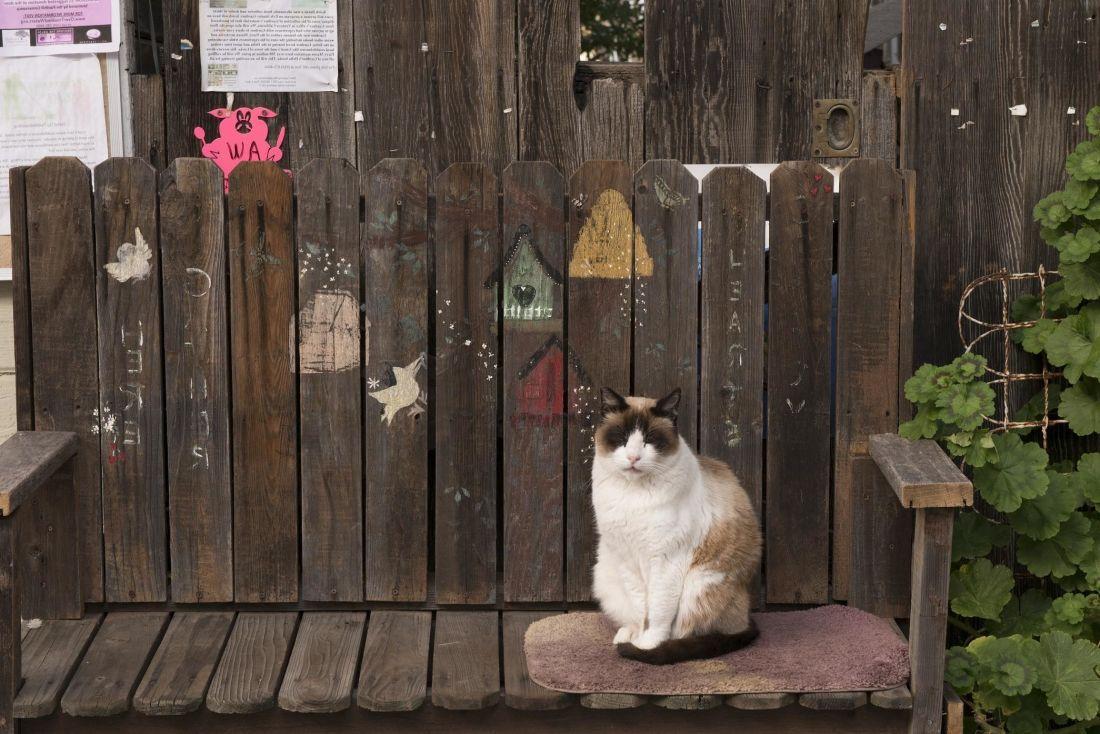 Image libre bois jardin ext rieur meubles porte chat for Porte bois exterieur jardin
