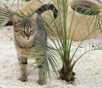 naturaleza, gato, patio trasero, gatito, palmera, suelo, tierra, animal doméstico, kitty
