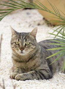 고양이, 동물, 귀여운, 모피, 애완 동물, 토양, 지상, 뒤뜰, 고양이, 고양이, 키티, 수염