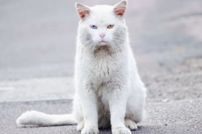 Hauskatze, niedlich, weiß, Kätzchen, Katze, Tier, Kitty, Fell