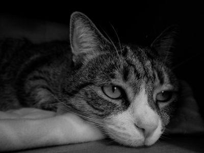 kat, portræt, monokrom, mørke, skygge, kæledyr, dyr, sød, killing