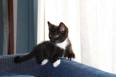 Crna mačka, interijera, urbana, prozora, životinja, kućni ljubimac, portret