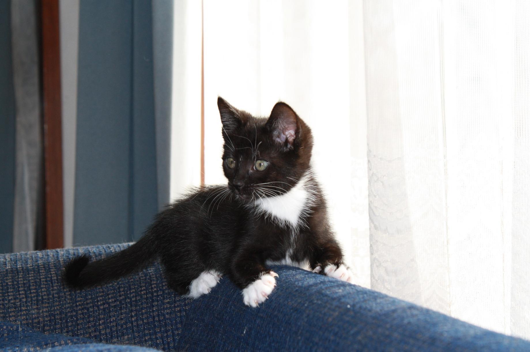 veľmi čierna mačička obrázky