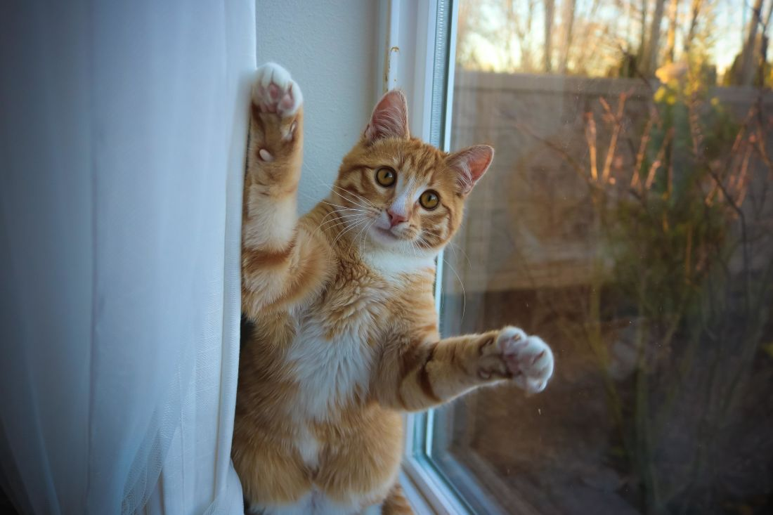 cat, portrait, cute, pet, feline, kitty, window, interior, playful, kitten, fur