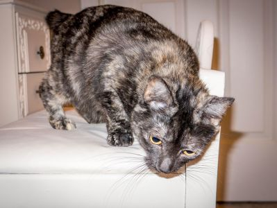 gato, animal doméstico, gato, retrato interior, animal, lindo, piel