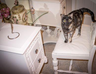 Zimmer, Möbel, indoor, graue Katze, Luxus