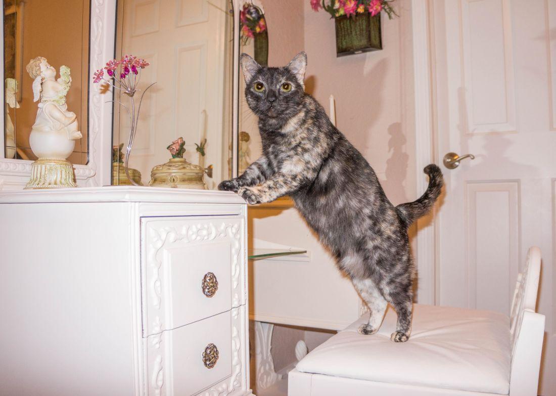 camera, mobili, casa, gatto domestico, felino, casa, interior