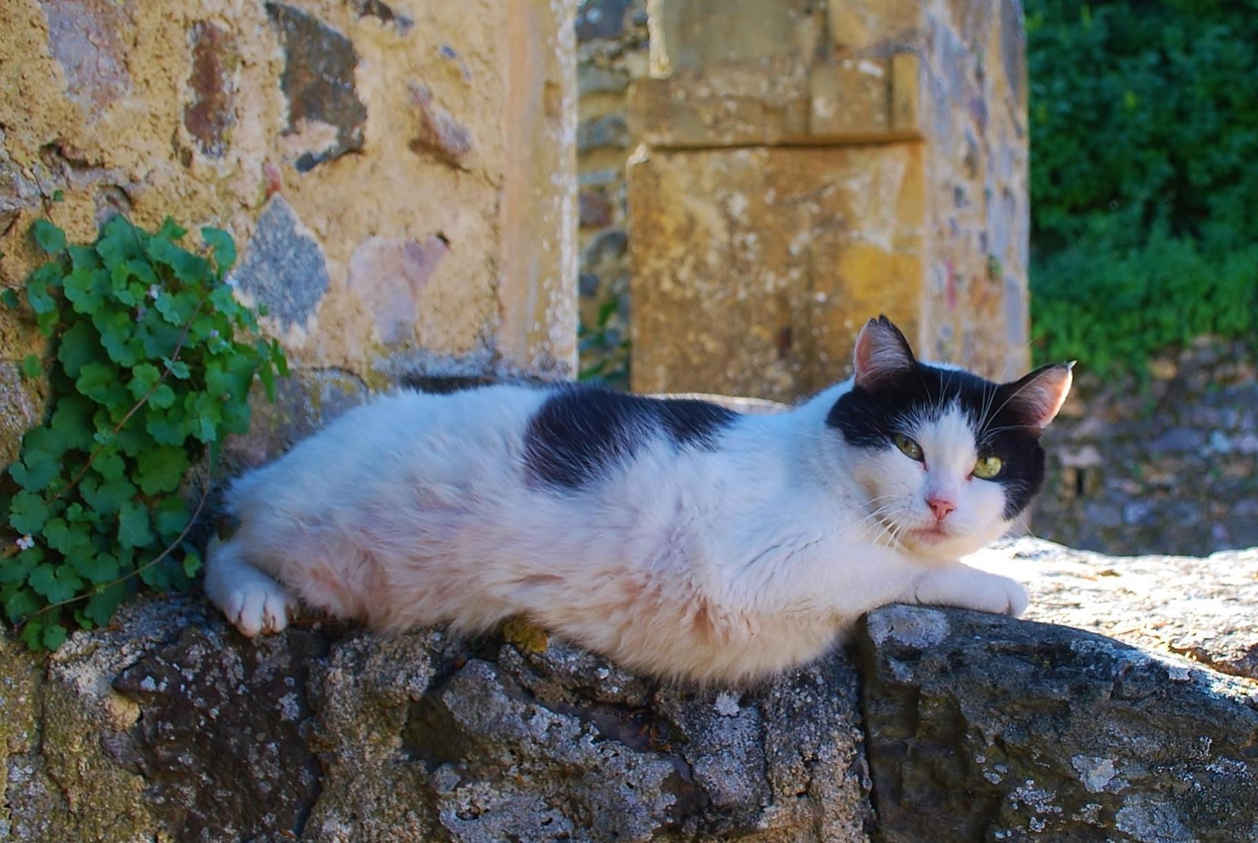 Prírodné čierne mačička pics