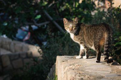 gray cat, nature, feline, animal, kitten, pet, fur, cute