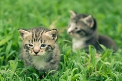 herbe, mignonne, animale, nature, chat, jeune, félin, chaton