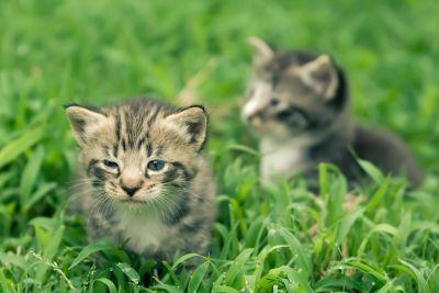 hierba, Linda, animal, naturaleza, gato, joven, felino, gato