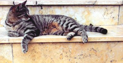 gris gato, retrato del animal doméstico, animal, lindo, gatito, felino, piel