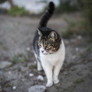 cat, cute, animal, fur, pet, portrait, nature, kitten, feline