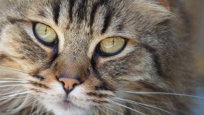 cat, portrait, animal, pet, eye, cute, fur, kitten, head