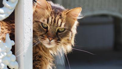 chat, animaux, animal, mignon, chaton, portrait, félin, kitty, fourrure