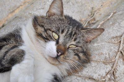 cat, cute, fur, animal, pet, eye, portrait, asphalt, kitten, feline