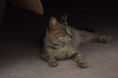 cat, portrait, pet, cute, shadow, dark, eye