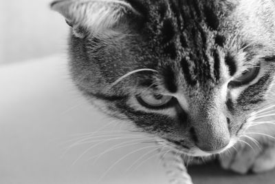 cat, animal, portrait, pet, cute, monochrome, kitten, eye