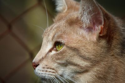 cat, animal, portrait, cute, eye, feline, kitty, domestic cat, head