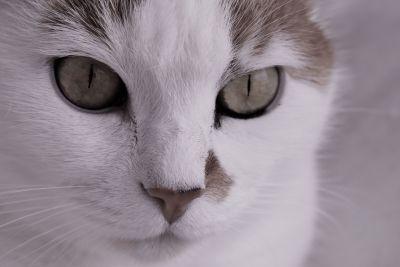 mačka, oko, roztomilý, mačiatko, zviera, zviera portrét,