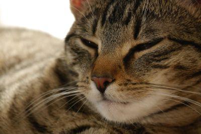 Katze, Fell, niedlich, Auge, Portrait, Tier, Haustier, Kätzchen, Schlaf, Whisker