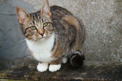 Hauskatze, Asphalt, Porträt, niedliche, Tier, Katze, Kitty, Haustier, Kätzchen