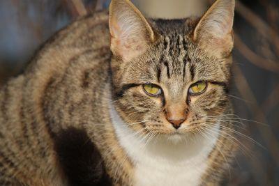 animal, cat, feline, pet, kitten, fur, kitty, whiskers