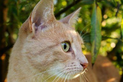 귀 엽 고, 노란 고양이, 호기심, 눈, 자연, 동물, 모피, 초상화, 젊은