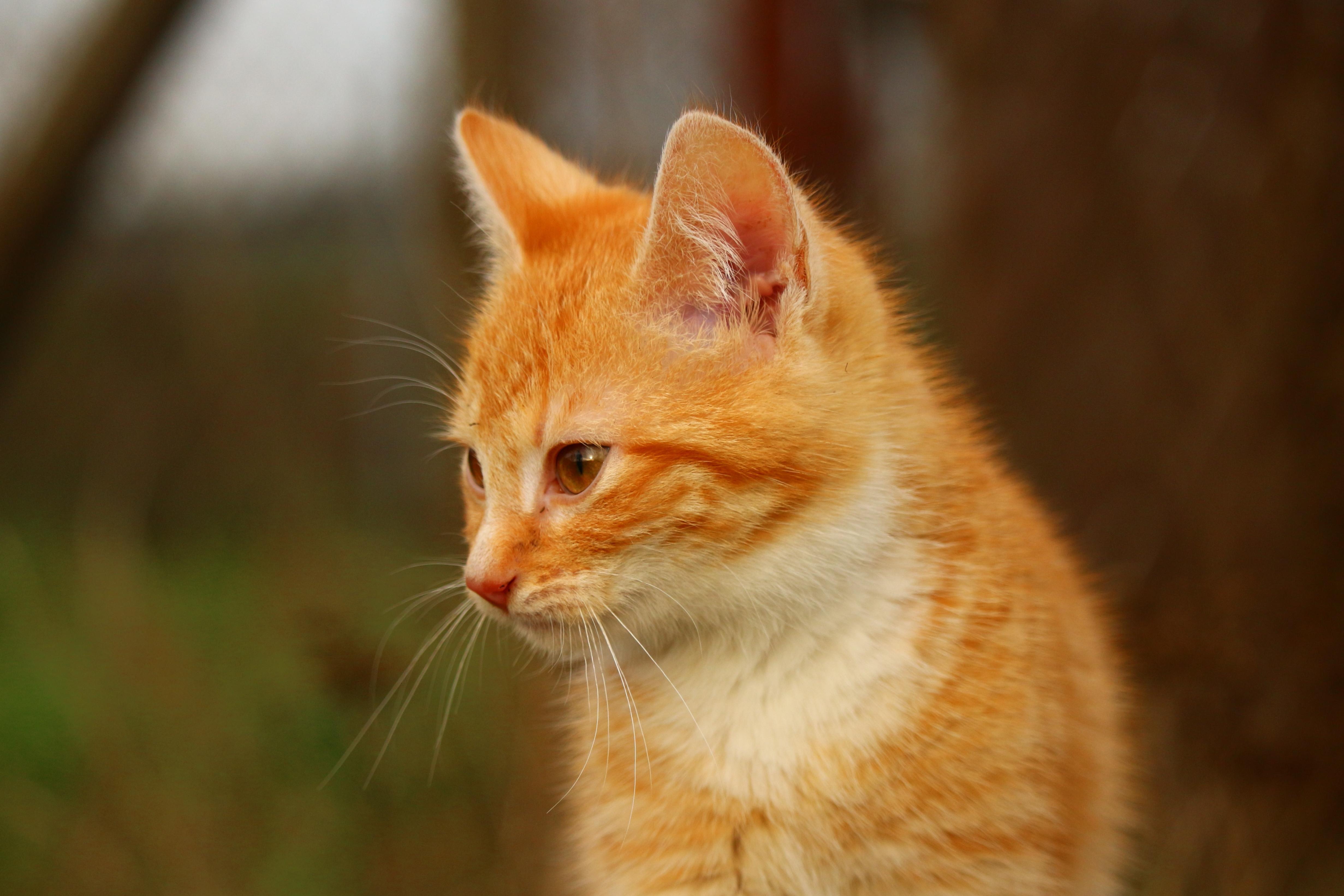 картинки желтого котика новгород, вид