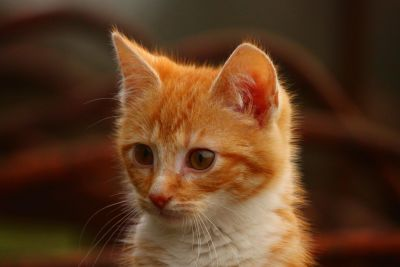 yellow cat, head, kitten, curious, cute, eye