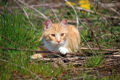 natura, gatto, carino, animale, erba, felino, erba, gattino, pelliccia